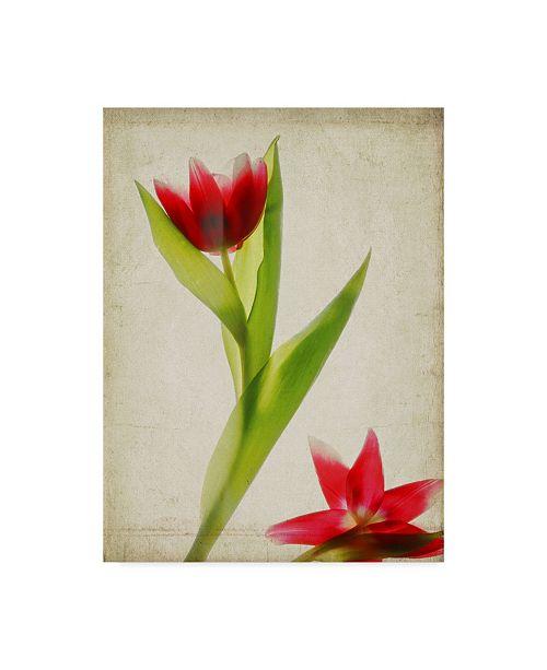 "Trademark Global Judy Stalus Parchment Flowers II Canvas Art - 15"" x 20"""