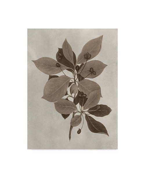 "Trademark Global Vision Studio Arbor Specimen I Canvas Art - 20"" x 25"""