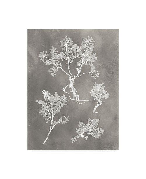 "Trademark Global Vision Studio Herbarium Study II Canvas Art - 20"" x 25"""