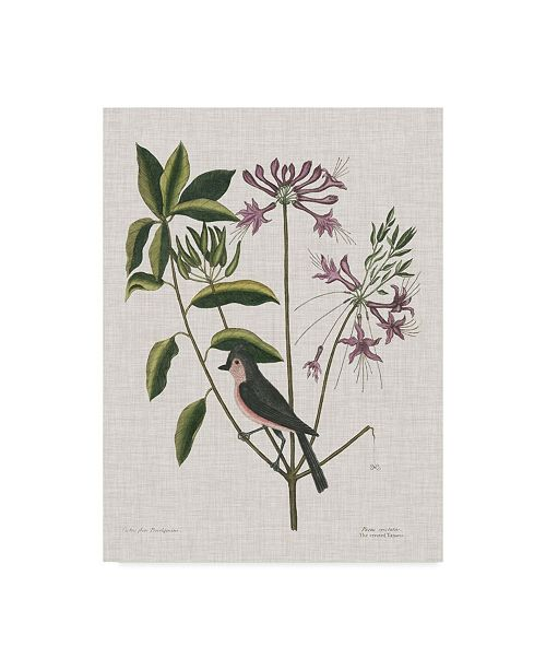 """Trademark Global Mark Catesby Studies in Nature I Canvas Art - 20"""" x 25"""""""