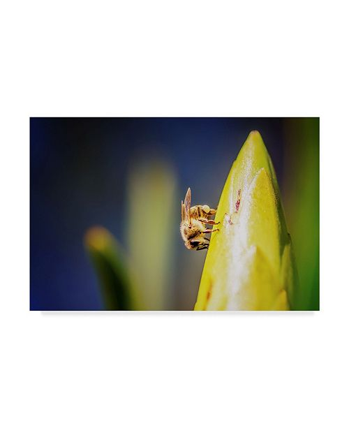 "Trademark Global Pixie Pics Bee on Protea Canvas Art - 20"" x 25"""