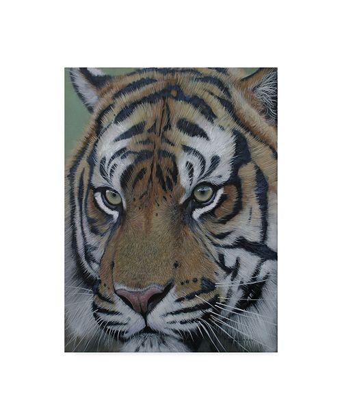 "Trademark Global Pip Mcgarry Sumatra Tiger Face 2011 Canvas Art - 37"" x 49"""