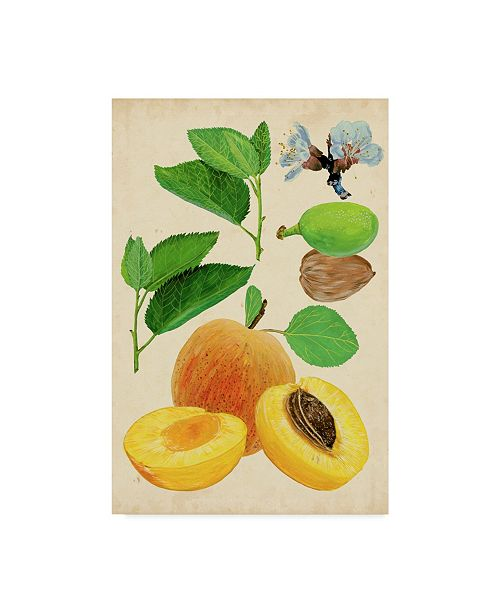 "Trademark Global Melissa Wang Apricot Study I Canvas Art - 20"" x 25"""