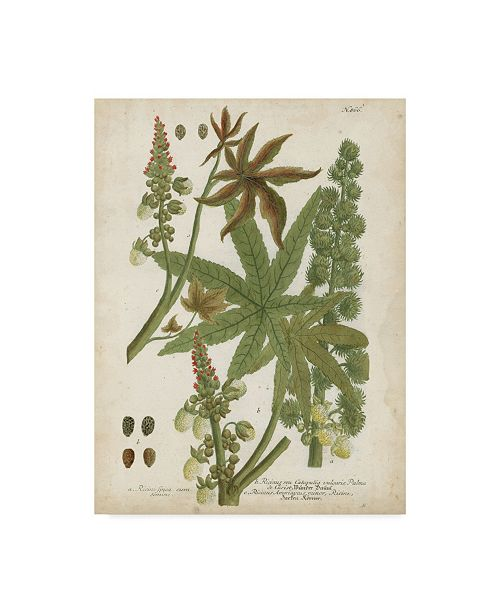 """Trademark Global Johann Weinmann Weinmann Tropical Plants I Canvas Art - 20"""" x 25"""""""
