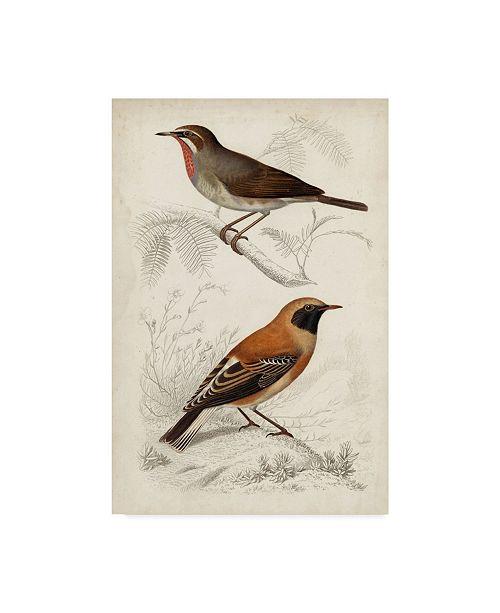 "Trademark Global M. Charles D'Orbigny D'Orbigny Birds VI Canvas Art - 37"" x 49"""