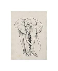 "Jennifer Goldberger Elephant Portrait Bold II Canvas Art - 20"" x 25"""