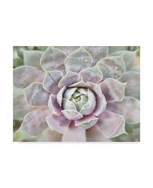 "Trademark Global Jason Johnson Succulent Glow I Canvas Art - 15"" x 20"""