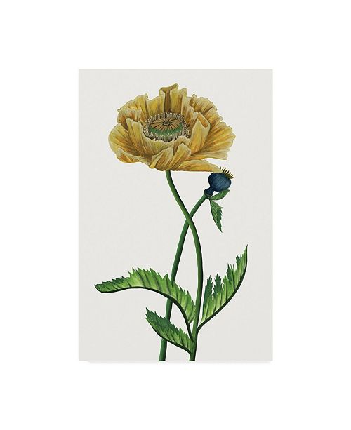"Trademark Global Melissa Wang Poppy Flower I Canvas Art - 20"" x 25"""