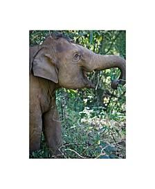 "American School Thai Baby Elephant Canvas Art - 37"" x 49"""