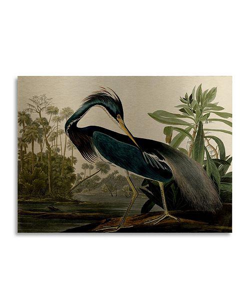"Trademark Global John James Audubon Louisiana Heron Floating Brushed Aluminum Art - 22"" x 25"""