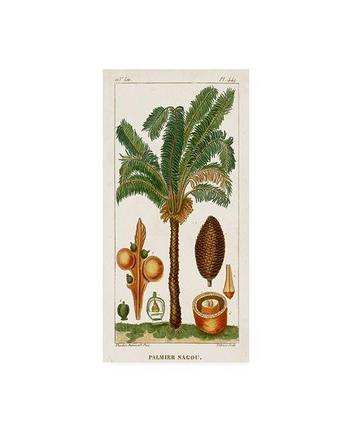 "Trademark Global Turpin Turpin Exotic Palms VII Canvas Art - 20"" x 25"""