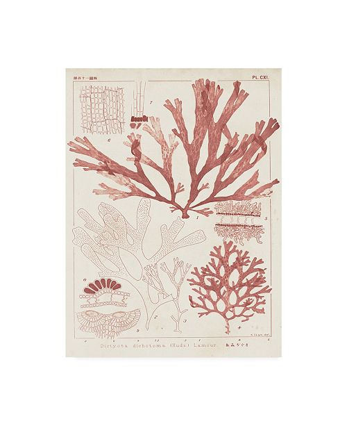 "Trademark Global Vision Studio Antique Coral Seaweed IV Canvas Art - 15"" x 20"""