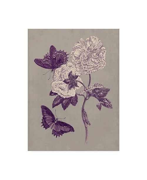 "Trademark Global Maria S. Merian Nature Study in Plum & Taupe IV Canvas Art - 37"" x 49"""