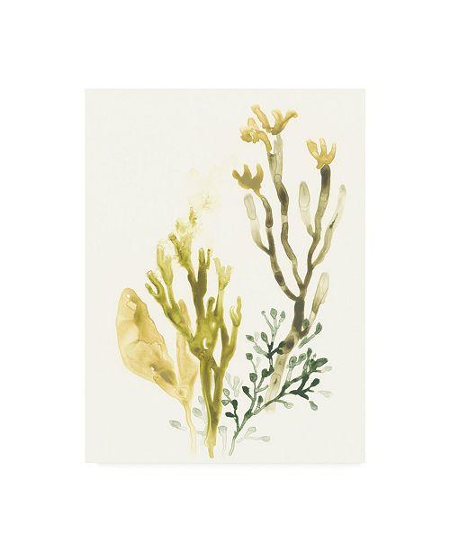 """Trademark Global June Erica Vess Kelp Collection II Canvas Art - 37"""" x 49"""""""