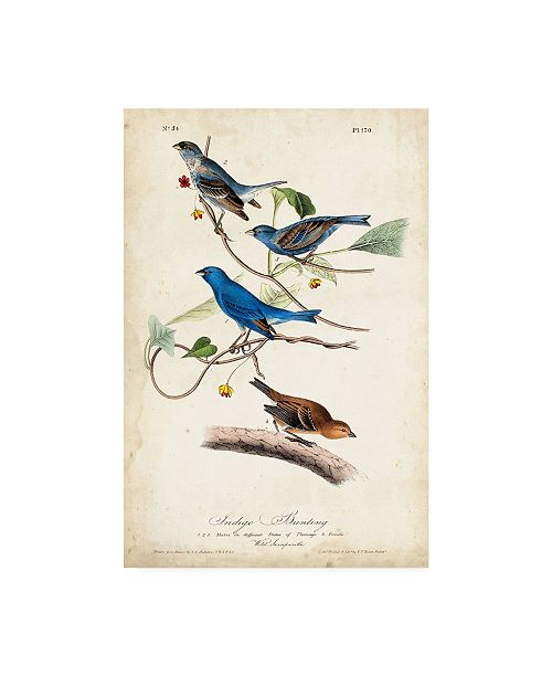 "Trademark Global John James Audubon Indigo Bunting Birds Canvas Art - 20"" x 25"""