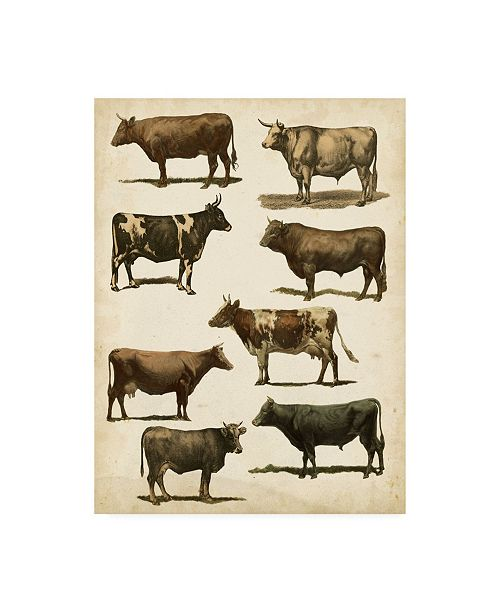 "Trademark Global Vision Studio Antique Cow Chart Canvas Art - 20"" x 25"""