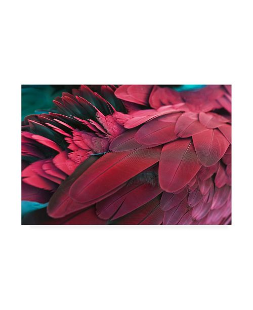 "Trademark Global PhotoINC Studio Feather Red Canvas Art - 19.5"" x 26"""