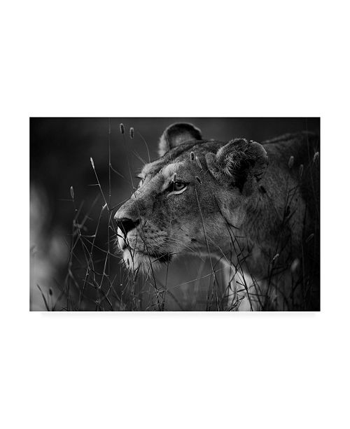 "Trademark Global Simona Forte Lion Portrait Canvas Art - 27"" x 33.5"""