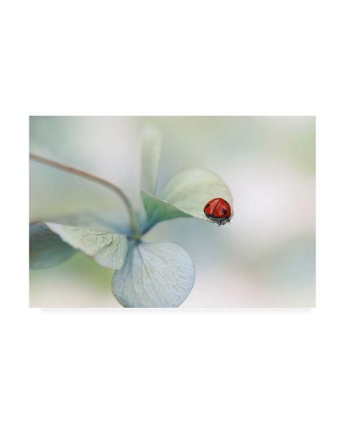 """Trademark Global Ellen van Deelen Ladybird on Hydrangea Canvas Art - 15.5"""" x 21"""""""