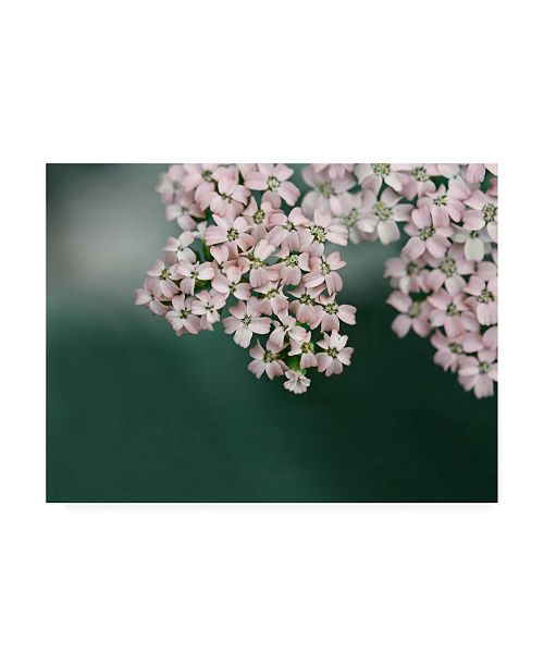 "Trademark Global Brooke T. Ryan Blush Pink Flowers Canvas Art - 15.5"" x 21"""