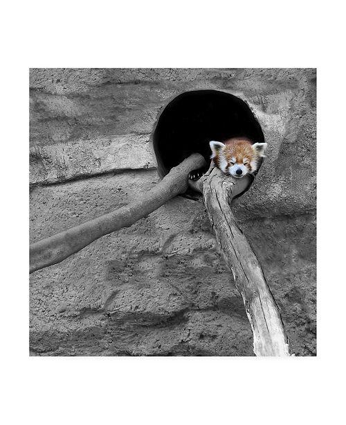 "Trademark Global Brooke T. Ryan Red Panda Sleeping Canvas Art - 15.5"" x 21"""