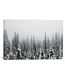 """iCanvas Trees Of Mt. Rainier by Christopher Kerksieck Wrapped Canvas Print - 26"""" x 40"""""""