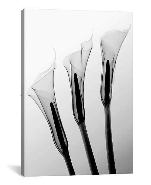 "iCanvas Callas I by Hong Pham Wrapped Canvas Print - 40"" x 26"""