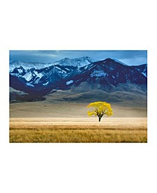 """- Lone Tree in Fall Pasture Canvas Art, 24"""" x 18"""""""