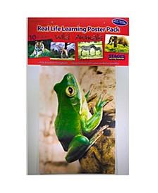 Real Photo Wild Animal Poster Set