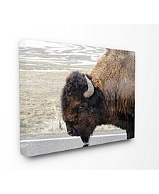 Beautiful Buffalo Photography Art Collection