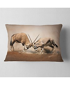"Designart Gemsbok Antelopes Fighting African Wall Throw Pillow - 12"" X 20"""