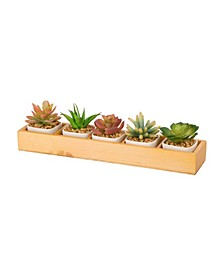 5-Piece Succulent Plants with Individual Ceramic Pots in Wooden Box