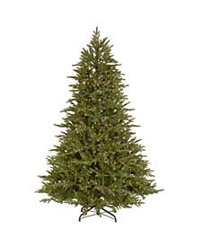 Bedminster Spruce