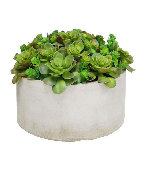 Winward Silks Winward International Succulent in Planter