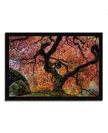 Japanese Maple in Autumn Framed Photograph Print