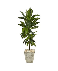 Dracaena Artificial Plant in Country Planter, Real Touch