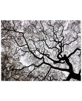 """'Japanese Maple Spring Abstract II' Canvas Print by Kurt Shaffer, 22"""" x 32"""""""