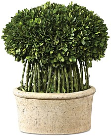 Uttermost Preserved Boxwood Willow Topiary