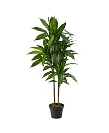 "43"" Dracaena Real Touch Plant"