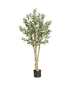 5' Olive Tree