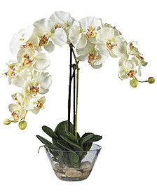 Phalaenopsis Flower Arrangement with Glass Vase
