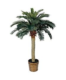 4' Sago Palm Tree