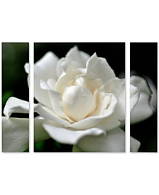 Kurt Shaffer 'Lovely Gardenia' Large Multi-Panel Wall Art Set