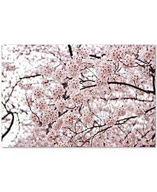 Ariane Moshayedi 'Cherry Blossoms' Canvas Wall Art