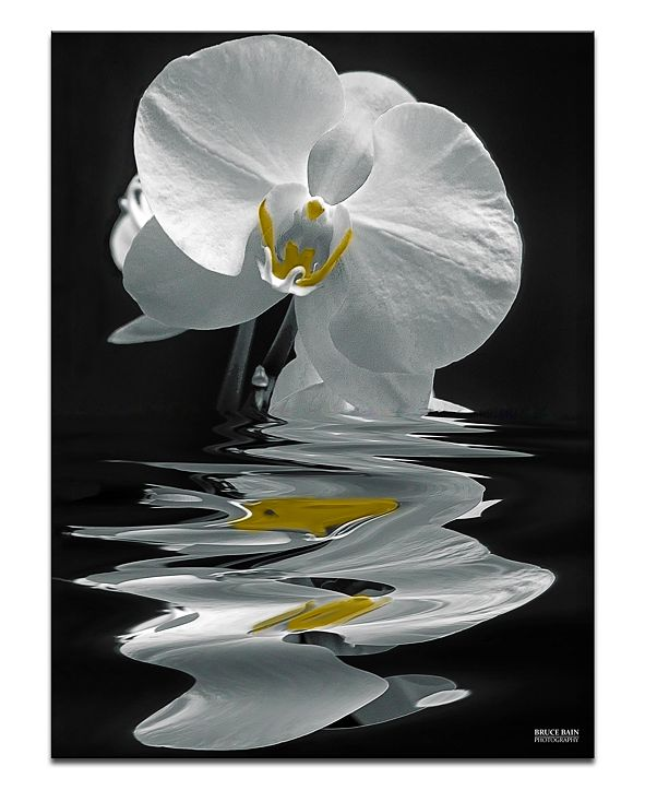 "Ready2HangArt 'White Orchid' Oversized 40"" x 30"" Canvas Art Print"