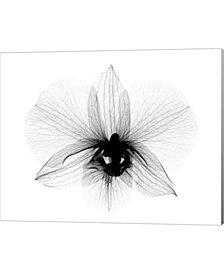 Dendrobium 2 Xray O By Bert Myers Canvas Art