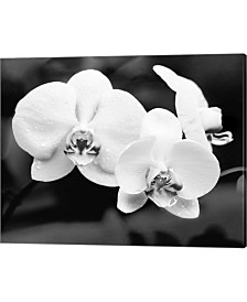 White Orchids By Harold Silverman Canvas Art
