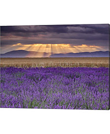 Sunbeams over Lavend by Michael Blanchette Photography Canvas Art
