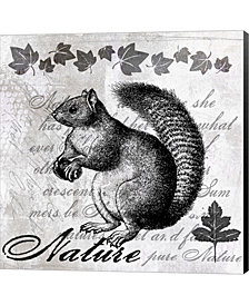 Squirrel Ii By Andrea Haase Canvas Art