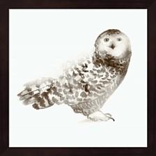 Owl By Edward Selkirk Framed Art